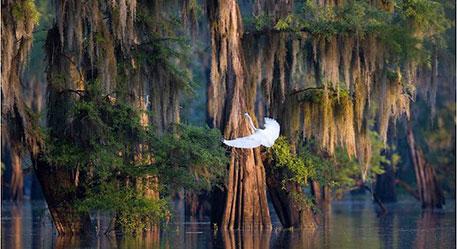 Louisiana Quilt Tour